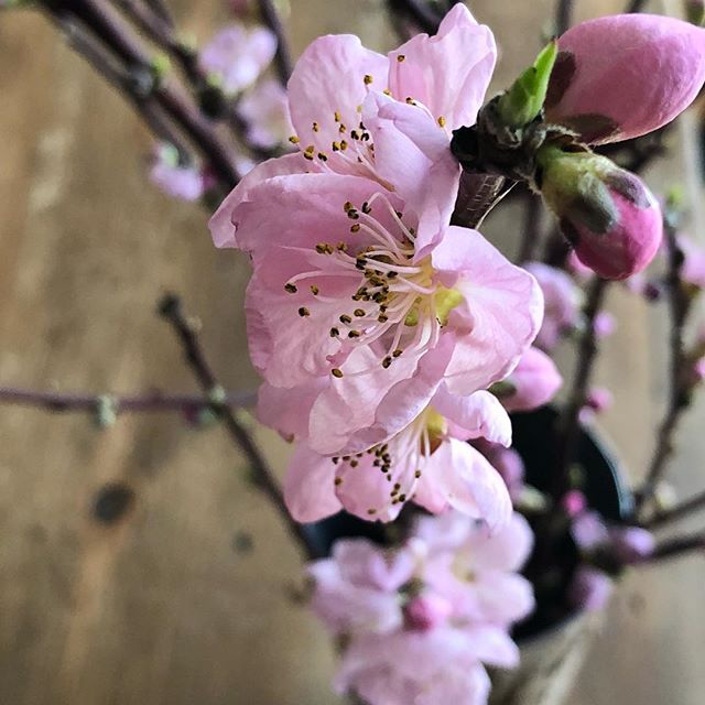 #springbreak #itsbeginningtolooklikespring #flowersofinstagram