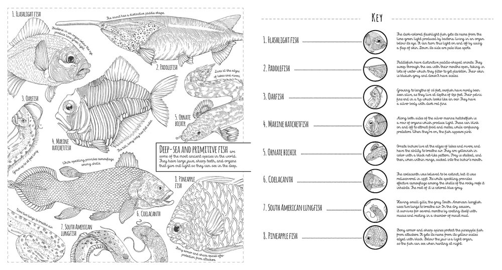 fish-spread.jpg