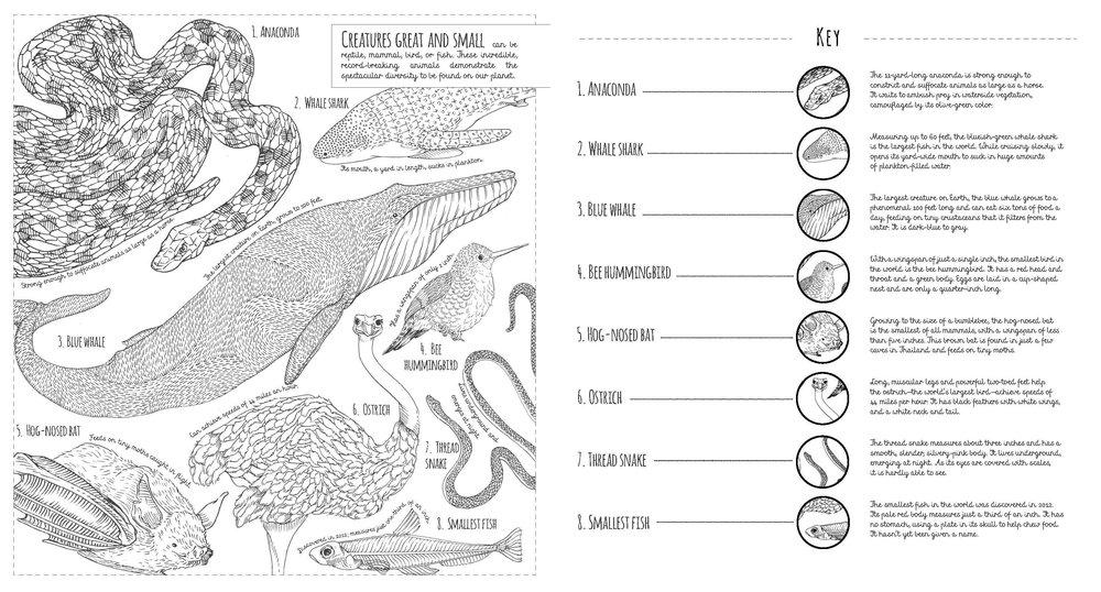 mammals-spread.jpg