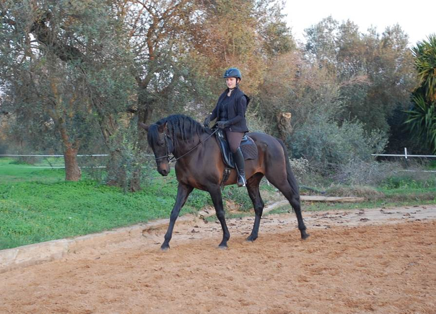 Dos Olivos dressage horse.jpg
