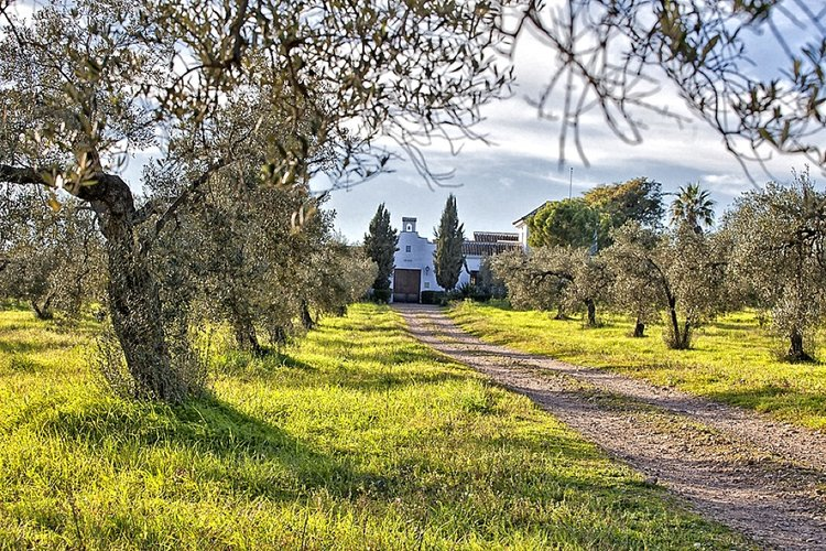 RETREATS New for 2017. A Spanish mindfulness retreat with Andalusian horses.