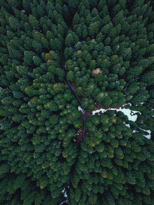 Willamette National Forest, Oregon