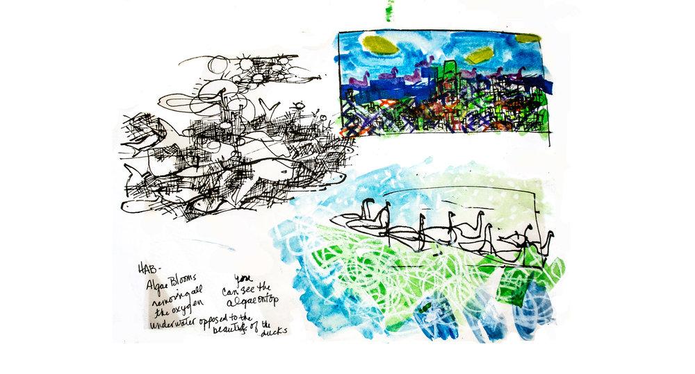 Drawings of Millers Pond.