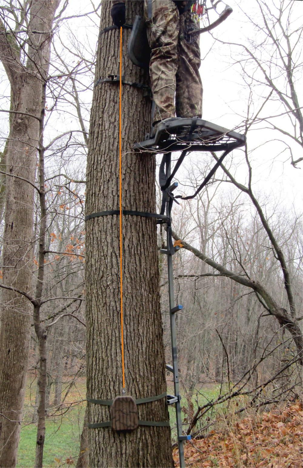 for tree stand color