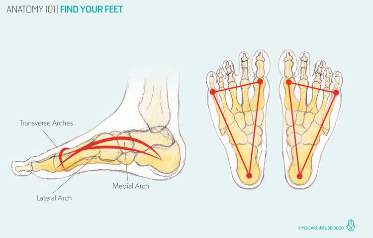 Anatomy 101 - find your feet — YOGARU