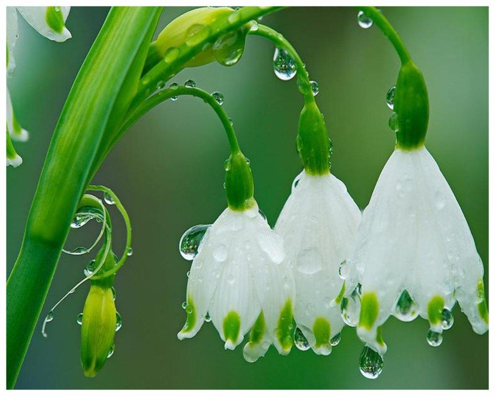 White Water Drops.jpg