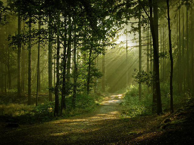Forest Trees God Light.png