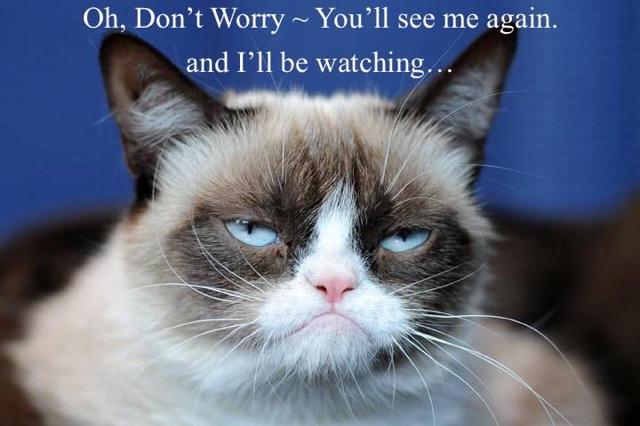 grumpy-cat copy.jpg