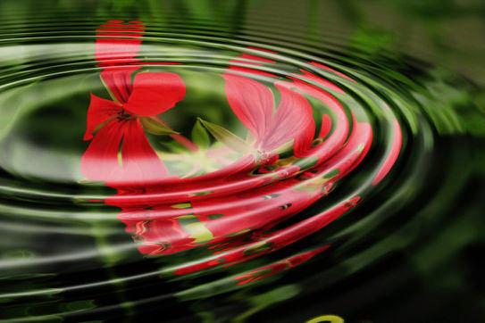 geranium-wave-water-rings-55813.jpg