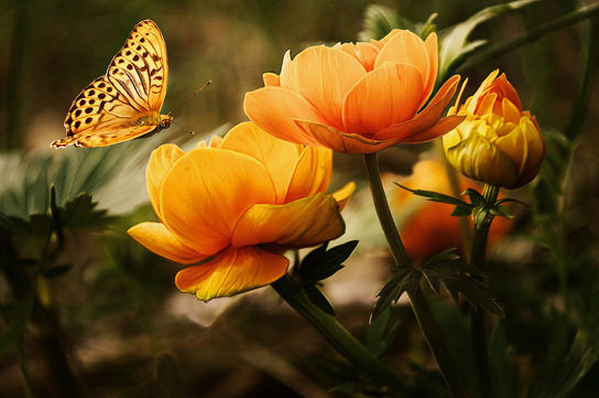 flowers-background-butterflies-beautiful-87452.jpg