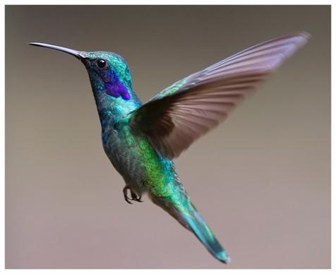 hummingbird-bird-birds-349758.jpeg