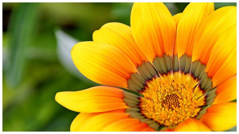 yellow-natural-flower copy 2.jpg