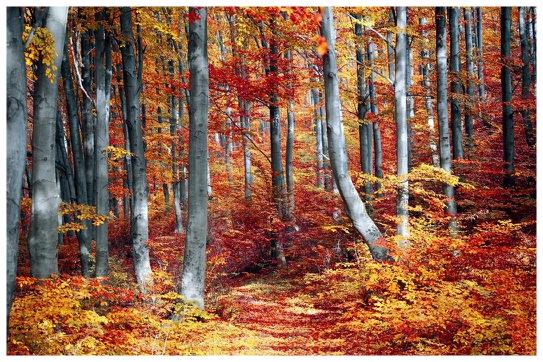 Autumn Forest - Med.jpg