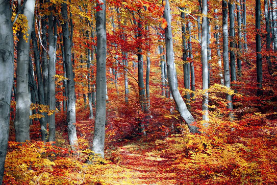 Autumn Forest - Med.jpg