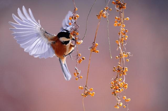 Bird Berries.jpg