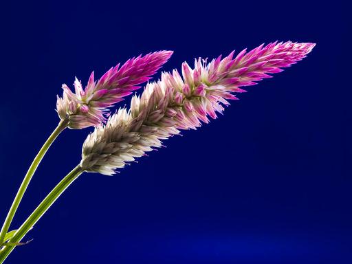 blossom-bloom-flower-wild-flower-62652 copy.jpg