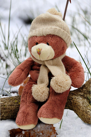 Teddy Bear Snow (1).jpg