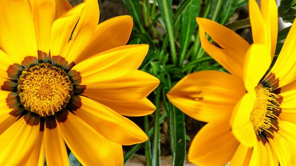 beautiful-beautiful-flowers-bloom-326826.jpg