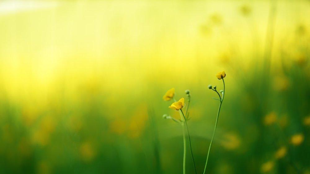 bloom-blossom-flora-1126372.jpg