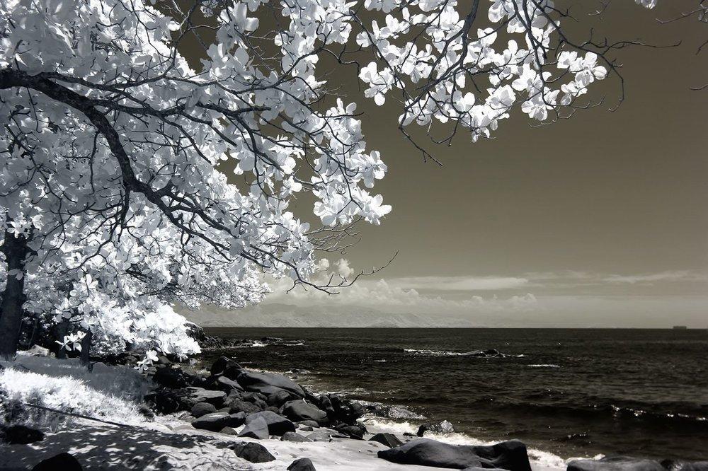B&W Sea Scape Tree.jpeg
