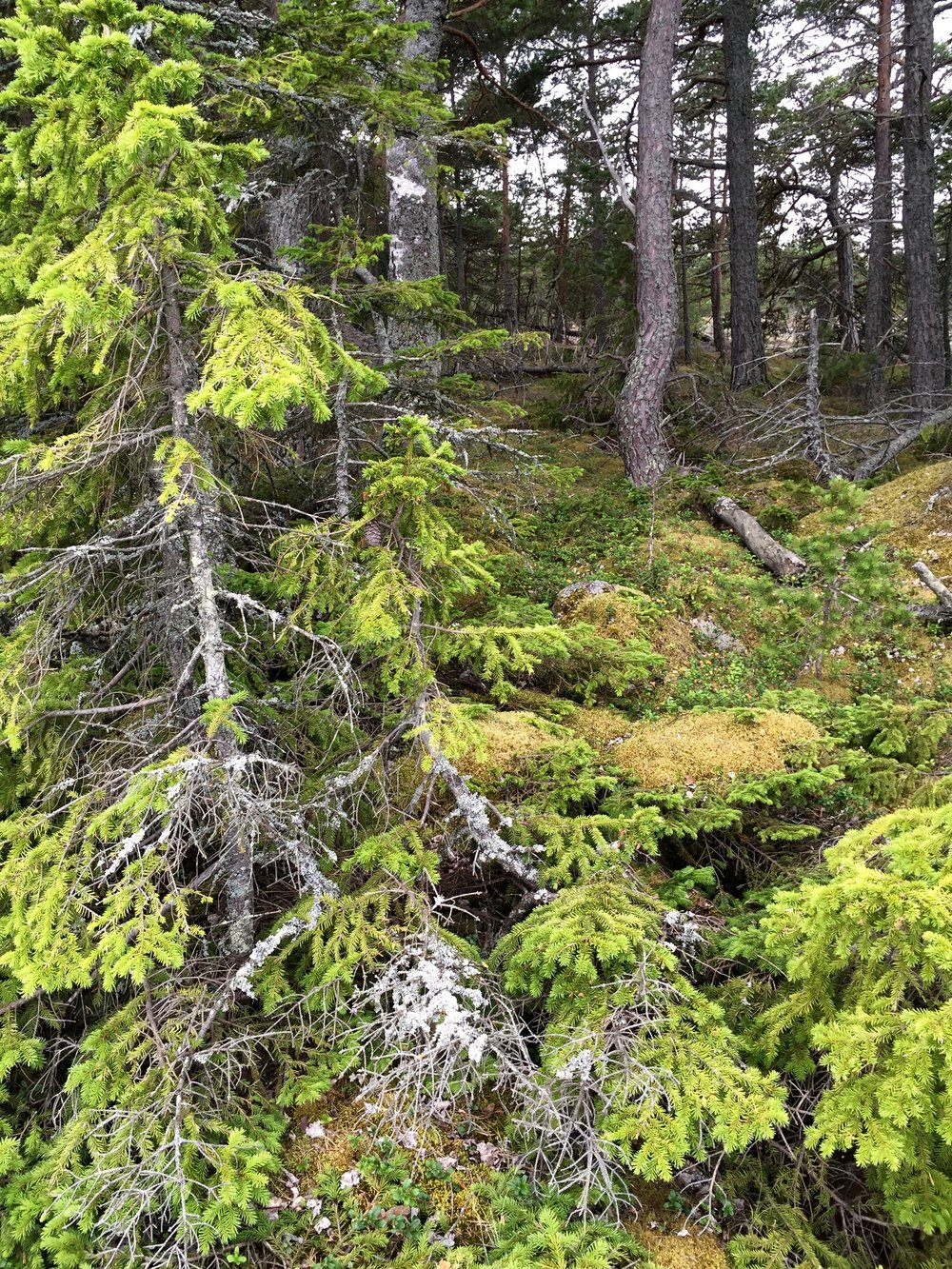 Aland woods.jpg