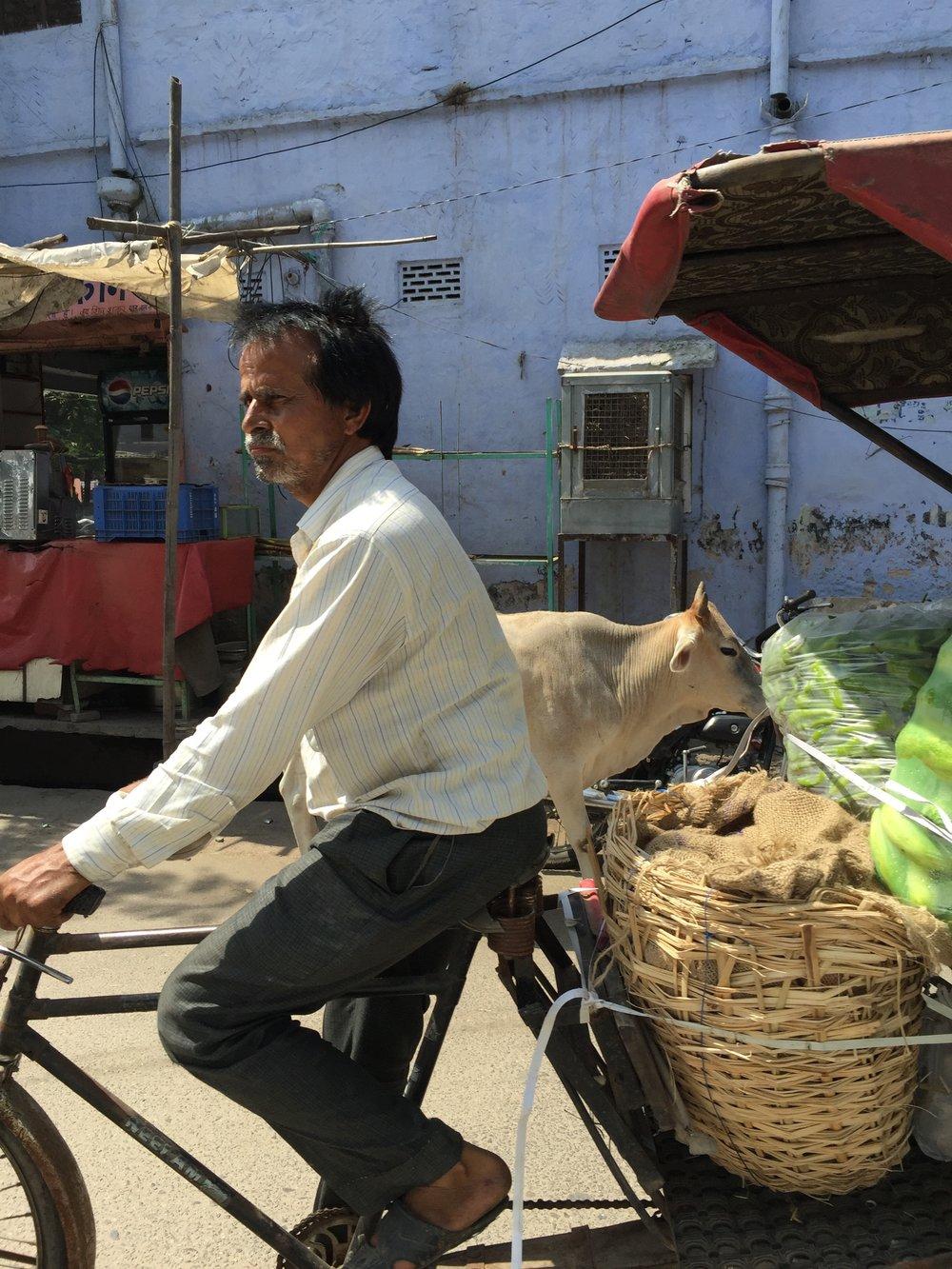 Jaipur 8.jpg