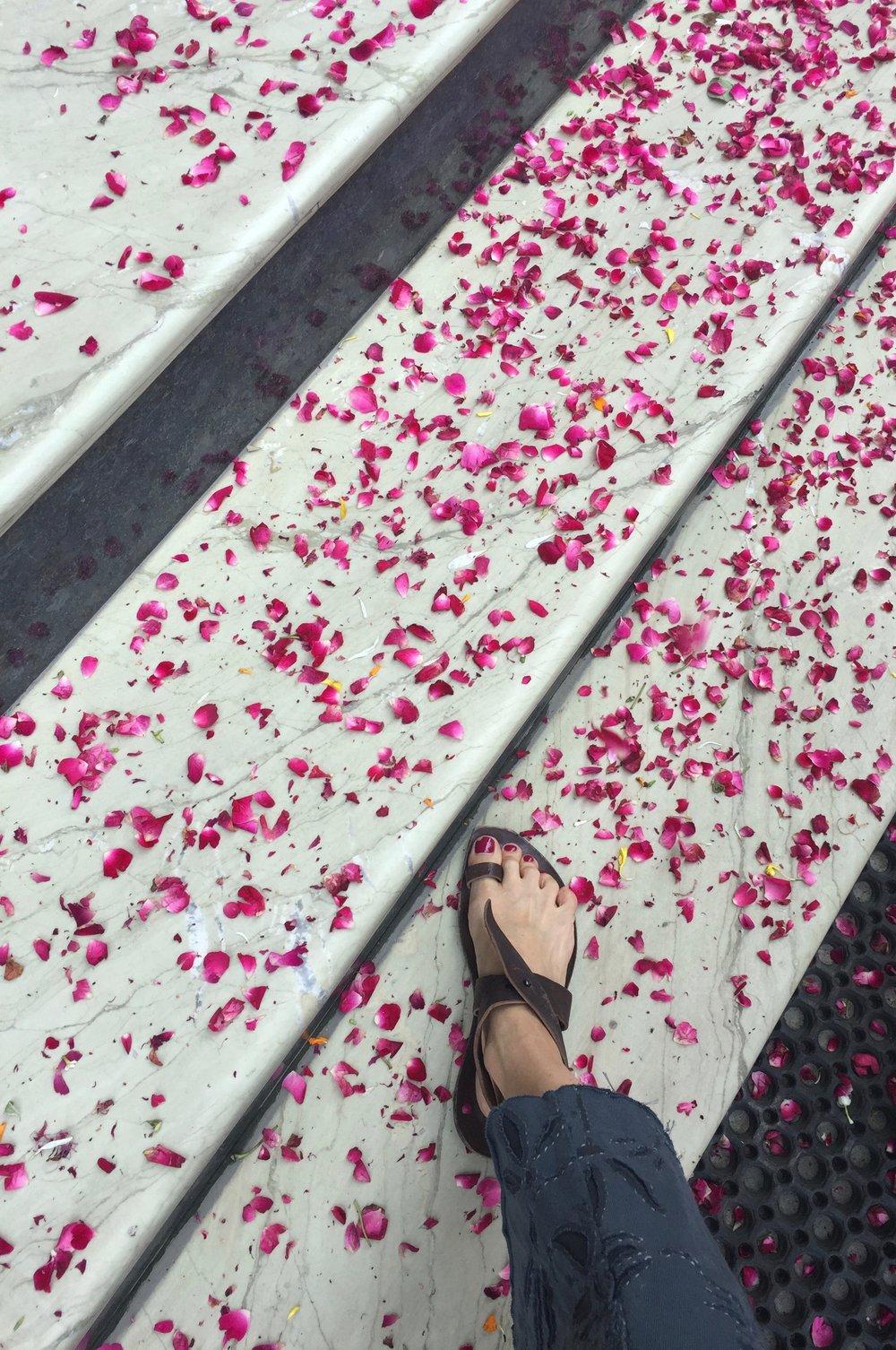Pink petals on steps.jpg