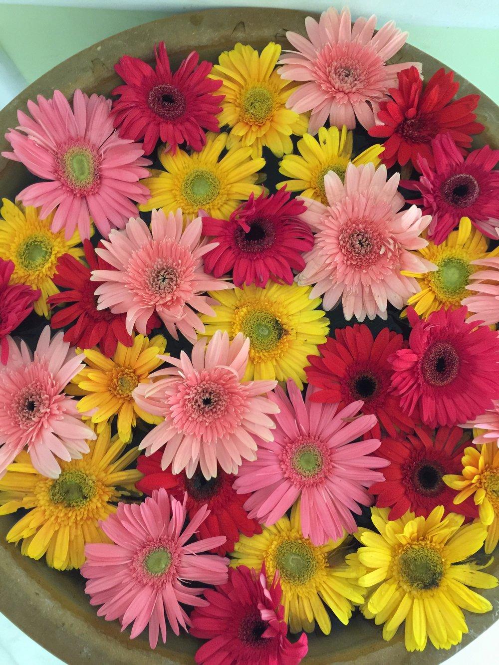 Taj flowers.jpg