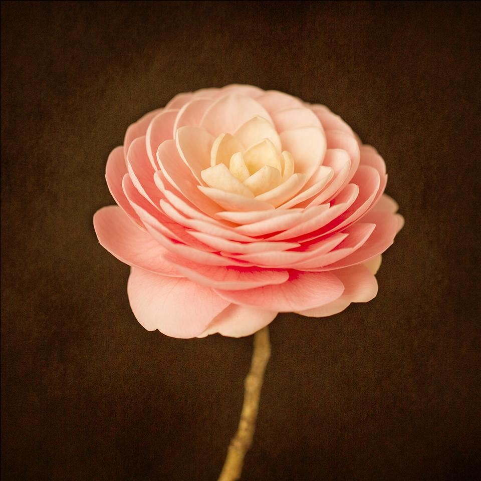 Camellia Portrait