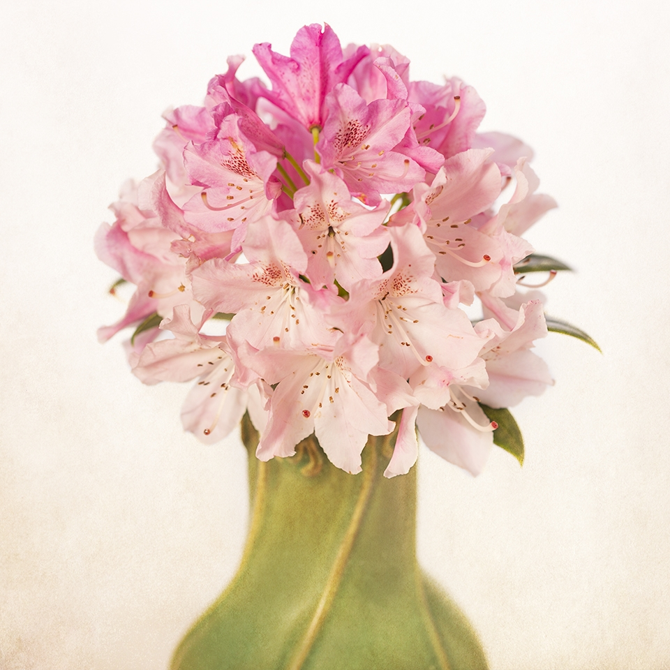 Rhododendron in green vase