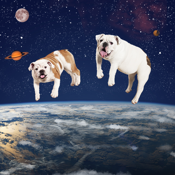 Two dogs in space.jpg