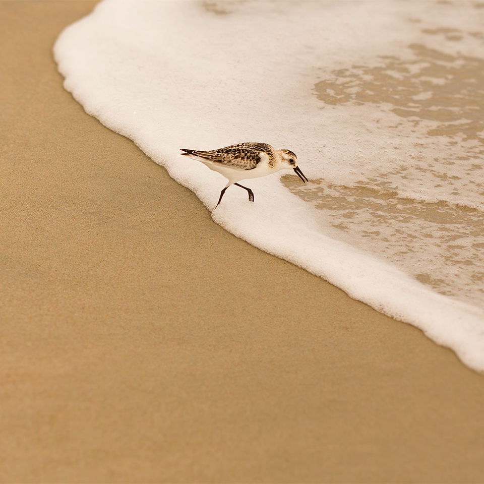 Bird on Shore