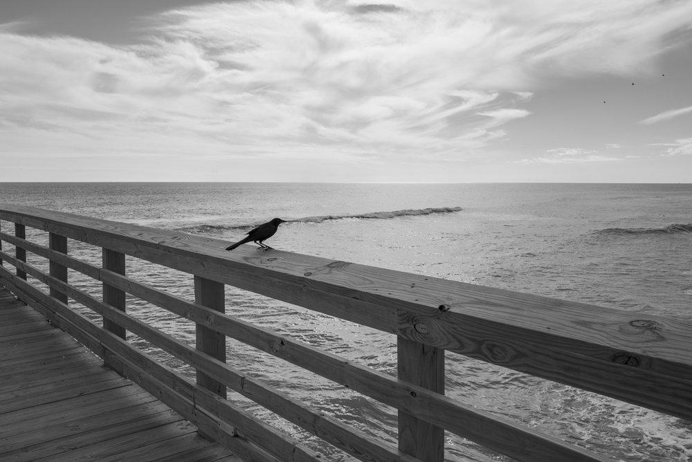 Crow on Pier