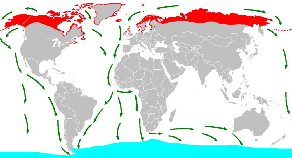Migrationpattern