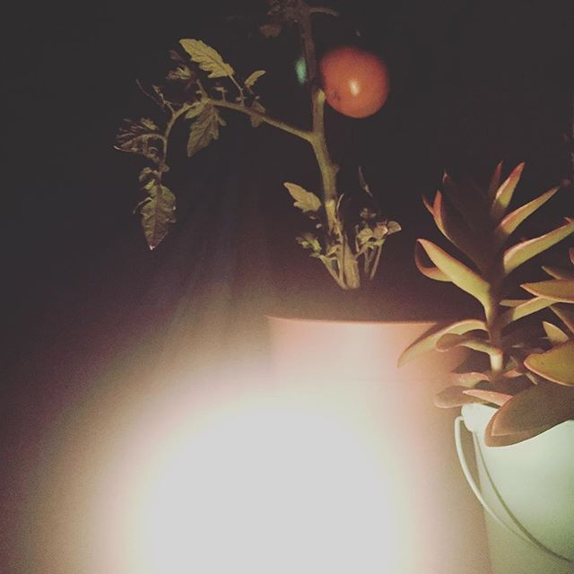 The power is out, so here is my tomato lit by candlelight 🍅