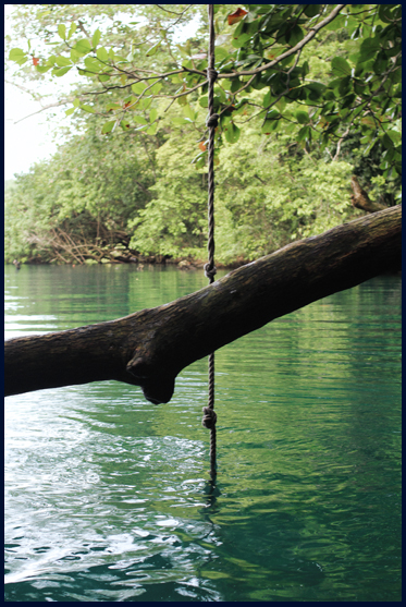 Rope swing off an almond tree at Blue Lagoon