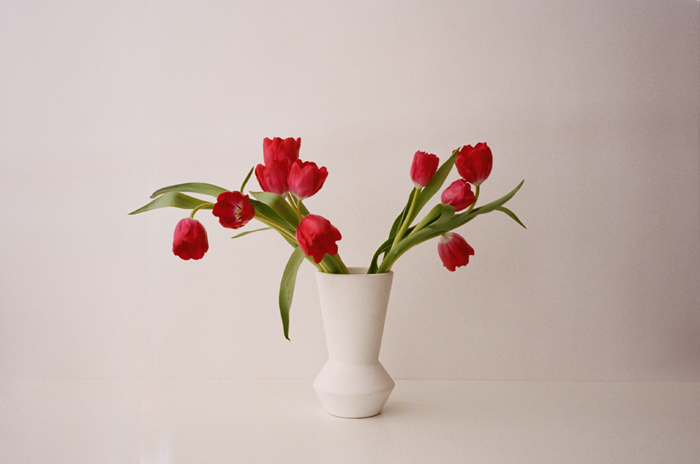 Red tulips in  our studio,  film photo by me.
