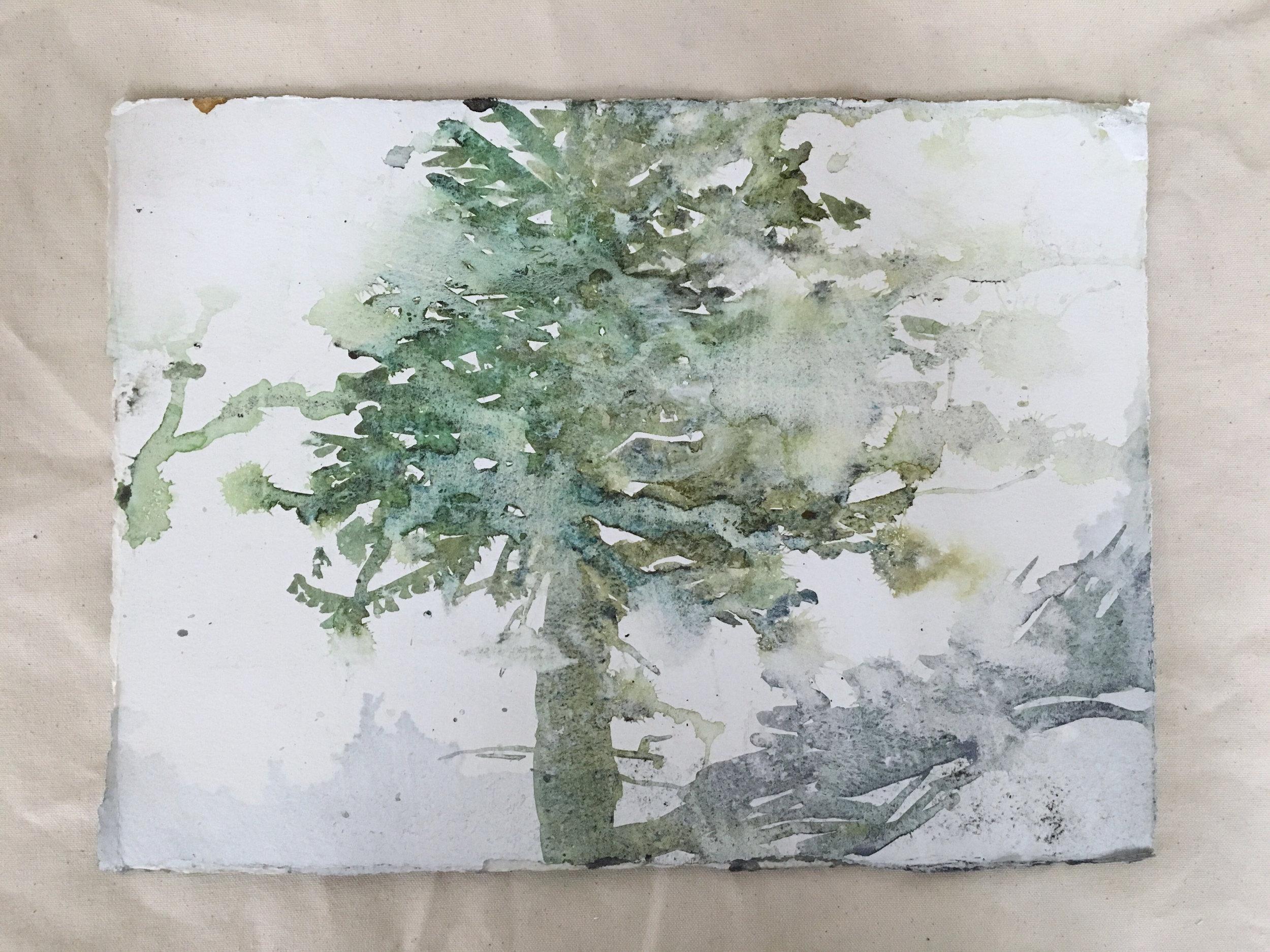 melty-tree