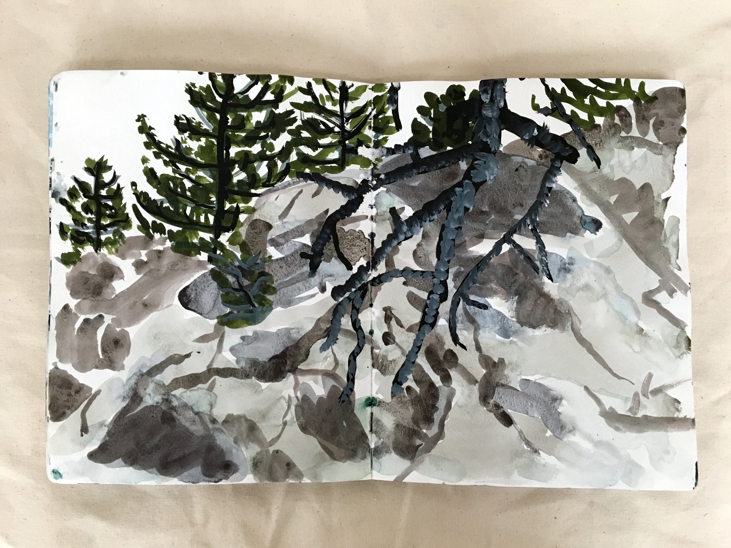pines-rocks