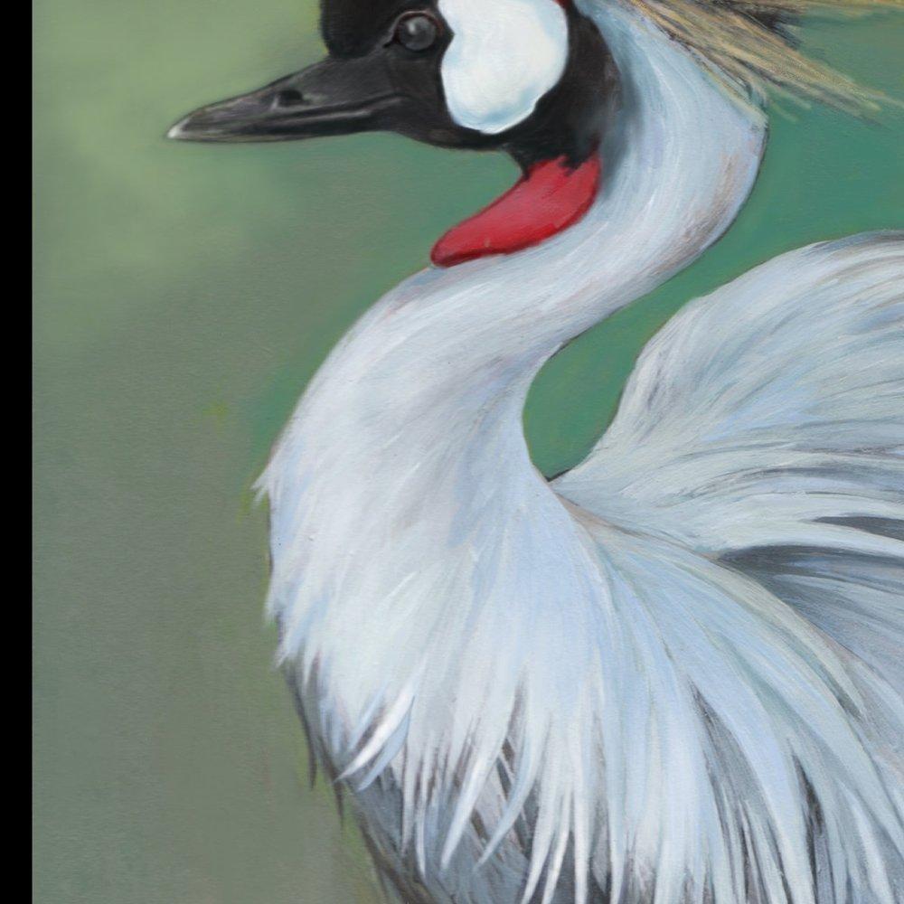 32 Crowned Crane.jpg