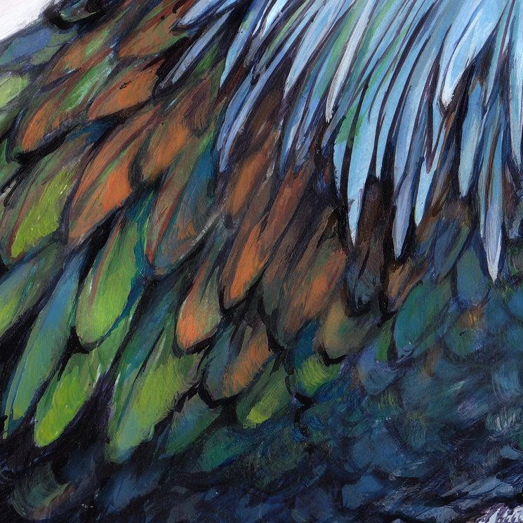 5 Nicobar Pigeon.jpg
