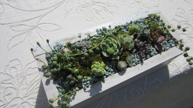 SucculentBoxes