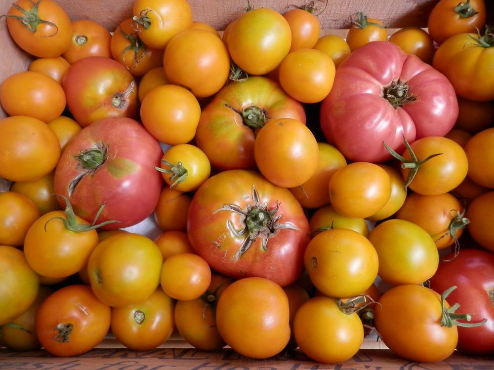 Oodles of Heirlooms!