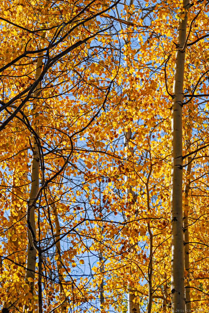 Fall Foliage near Sun Mountain Lodge