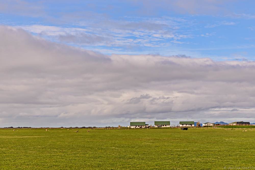 Farm in South Iceland