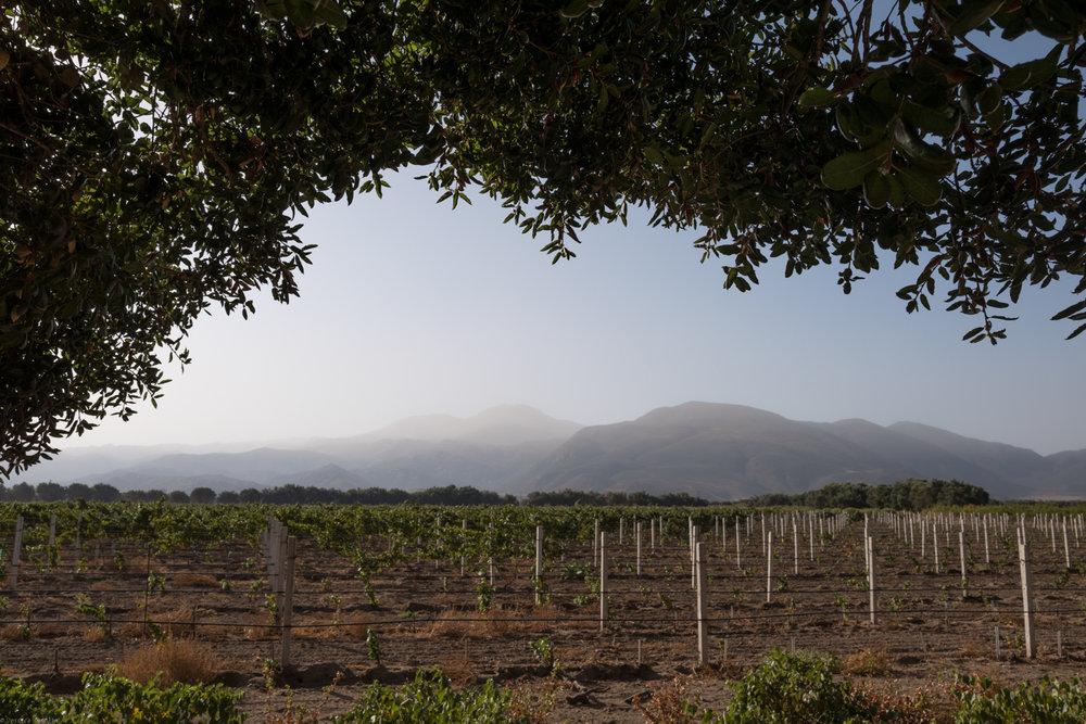 Bruma Vineyards
