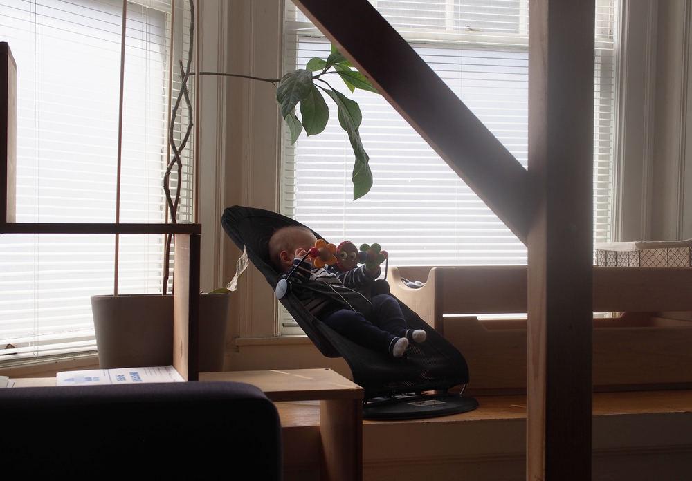 Theoden surveys the world from his Baby Bjorn bouncer and bay window perch.