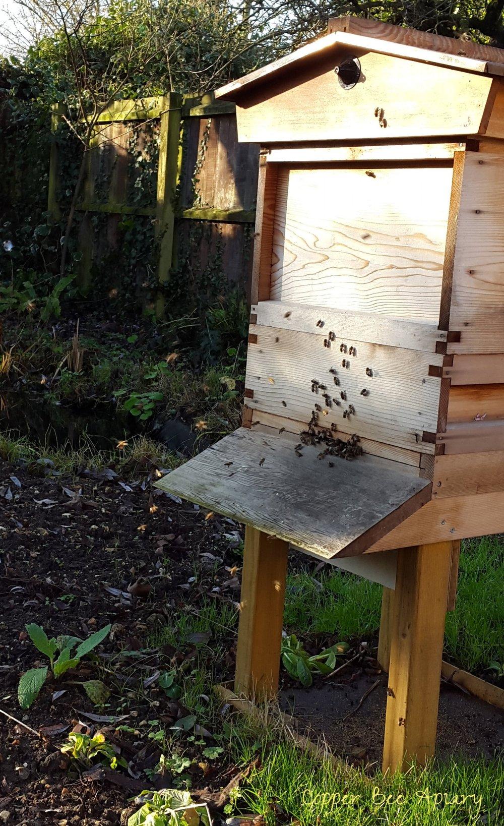 Copper Hive