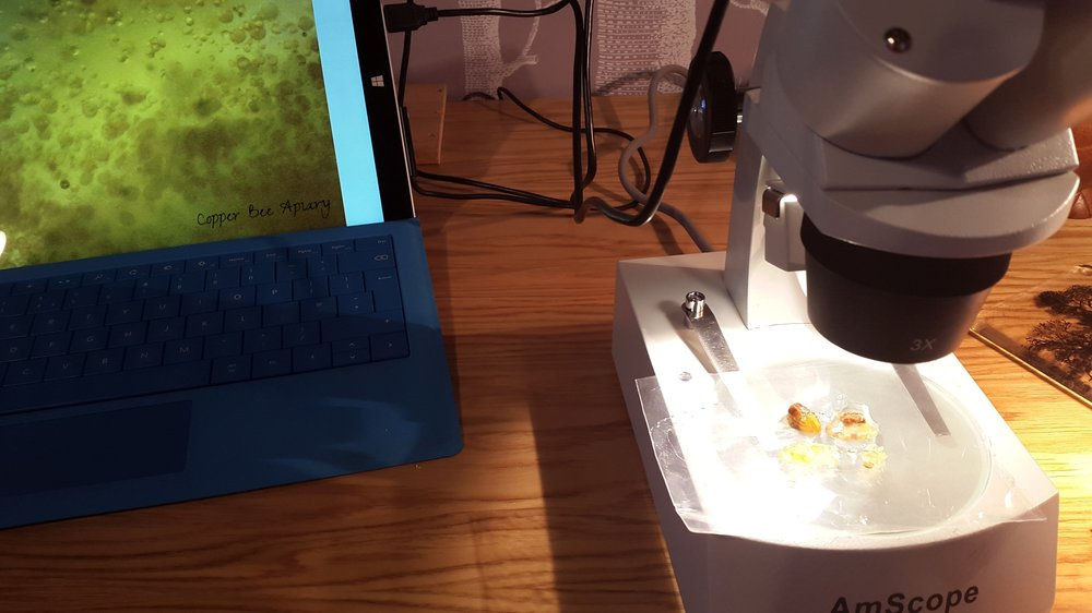 Looking at honey, wax and pollen with incident (reflected) light