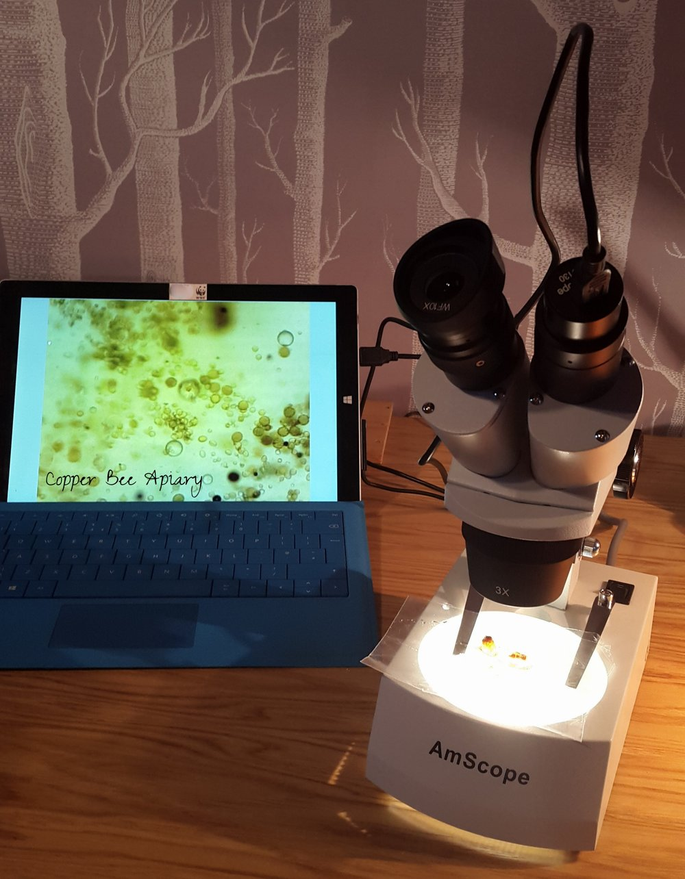 Looking at honey, wax and pollen with transmitted light